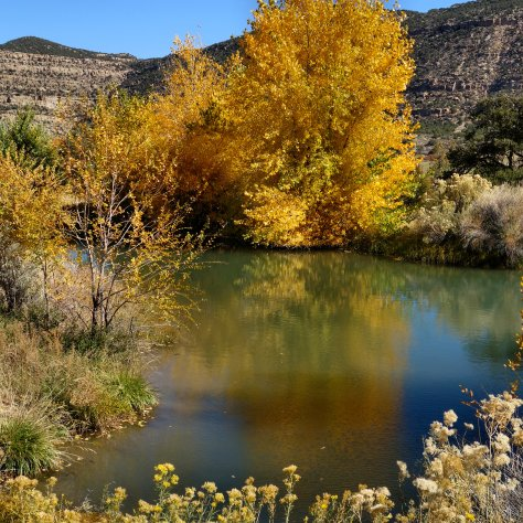 reflections, autumn colors, ranch pond, cottonwood trees, Animas River Valley, Riverside,New Mexico